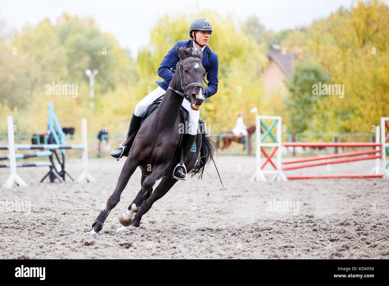 Dark Bay Horse Galloping High Resolution Stock Photography And Images Alamy