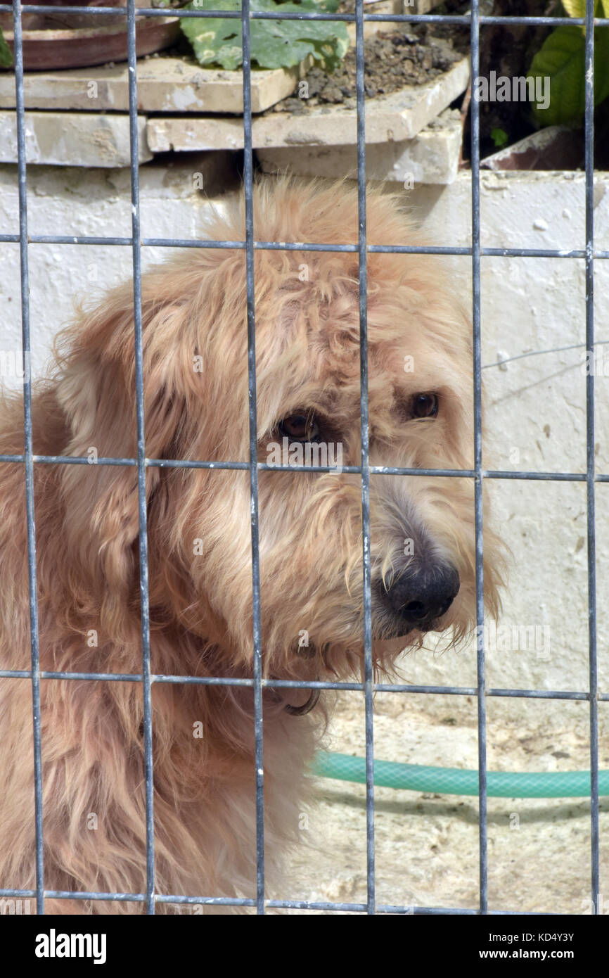 a sad unhappy looking dog in a cage with a sad face behind bars or wires with a fluffy coat. - Stock Image