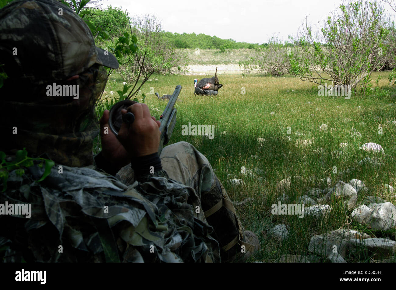 A spring turkey hunters uses a call to lure turkeys while hunting near Coleman Texas - Stock Image