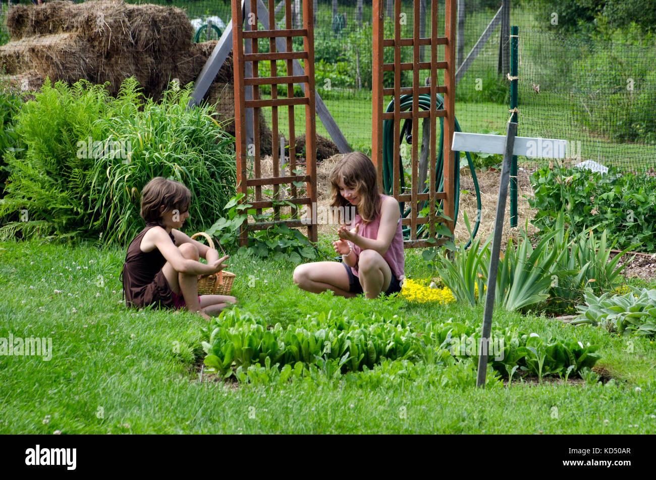 Two girls working in community garden for camp, Yarmouth Maine, USA - Stock Image