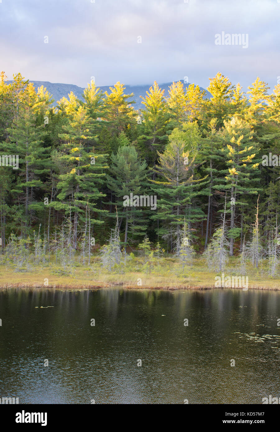 A pond in Baxter State Park in Maine with sunlit evergreen trees in the background and overcast skies above. Photographed - Stock Image