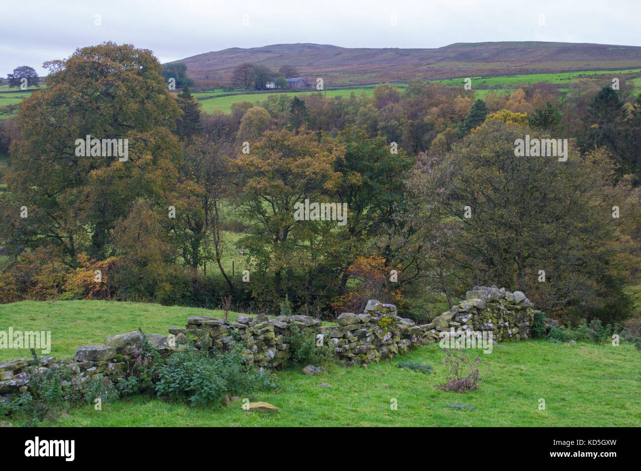 Autumn in the North Pennines - Stock Image
