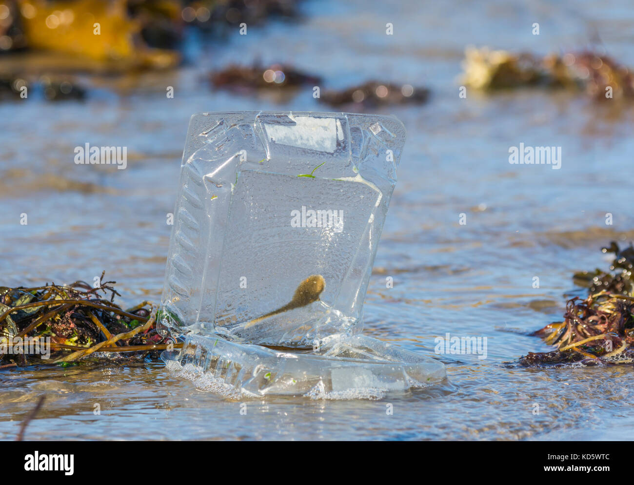 Discarded plastic food container washed up on a beach by the sea in the UK. Sky ocean rescue. - Stock Image