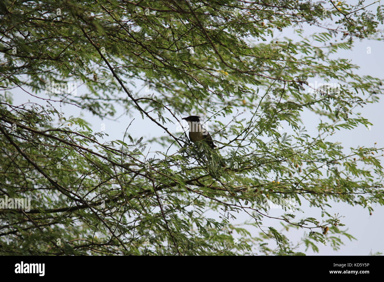 Bird sitting on the branch of a tree at Sultanpur National Park, Gurugram, Haryana, India - Stock Image