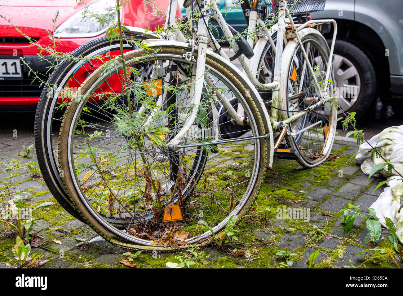 Bicycle parking stands in a city, bikes are overgrown by plants, bicycles parking here for a long time, old, broken, - Stock Image
