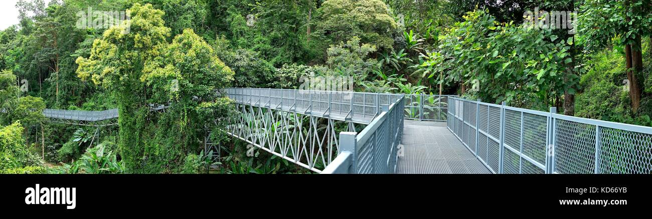 Panorama view of Tree Canopy Walkway, The Iron Bridge in the tropical forest at Queen Sirikit Botanic Garden, Chiang Stock Photo