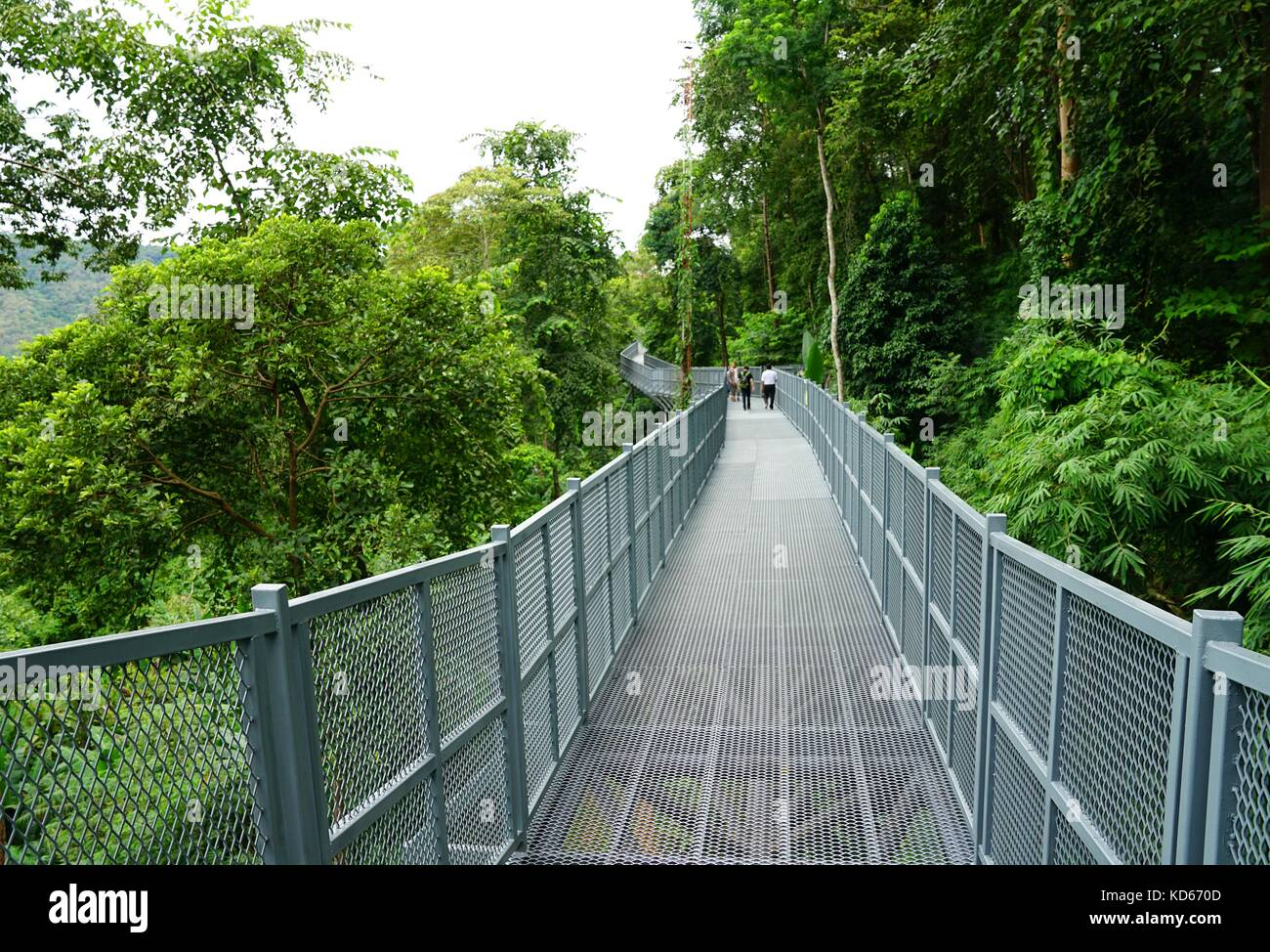 Tree Canopy Walkway, The Iron Bridge in the tropical forest at Queen Sirikit Botanic Garden, Chiang Mai, Thailand - Stock Image