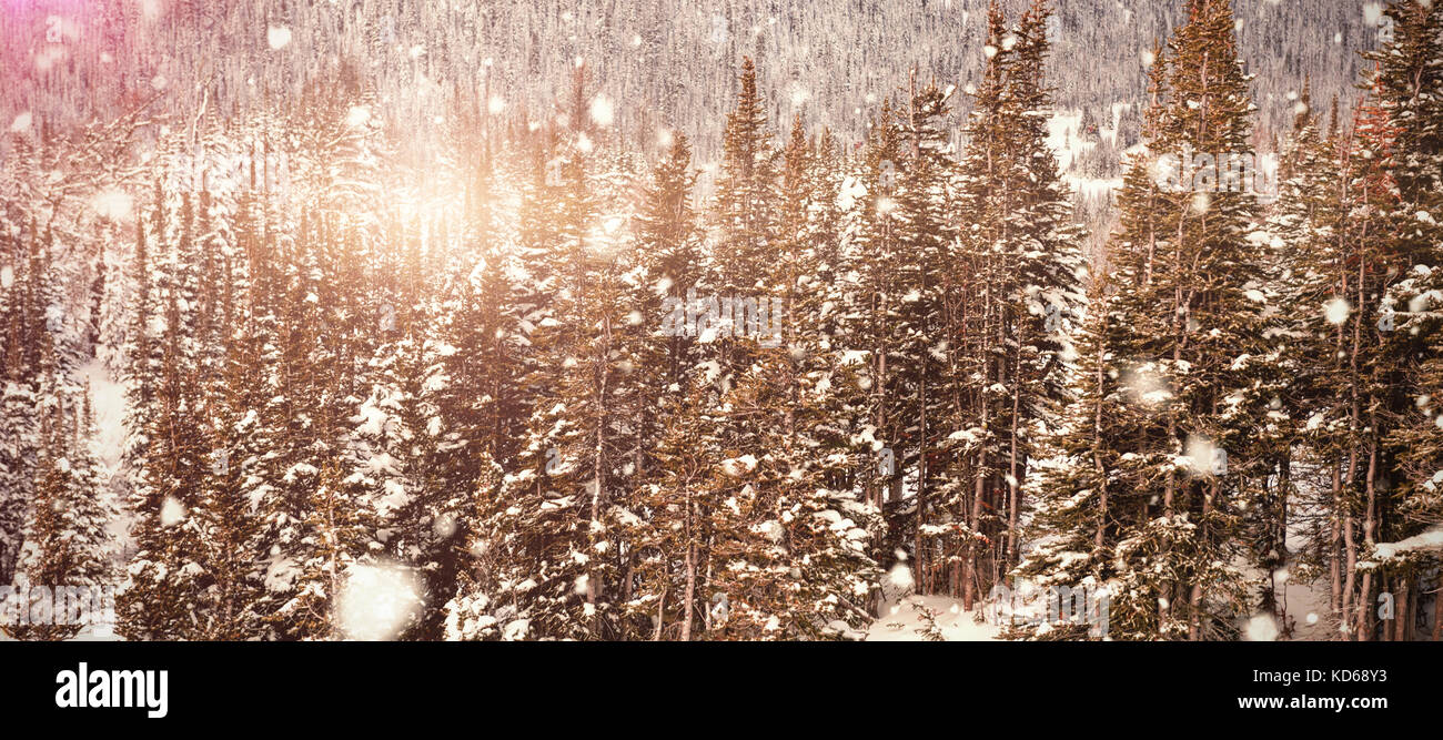 Snow falling against snow covered pine trees on alp mountain slope - Stock Image