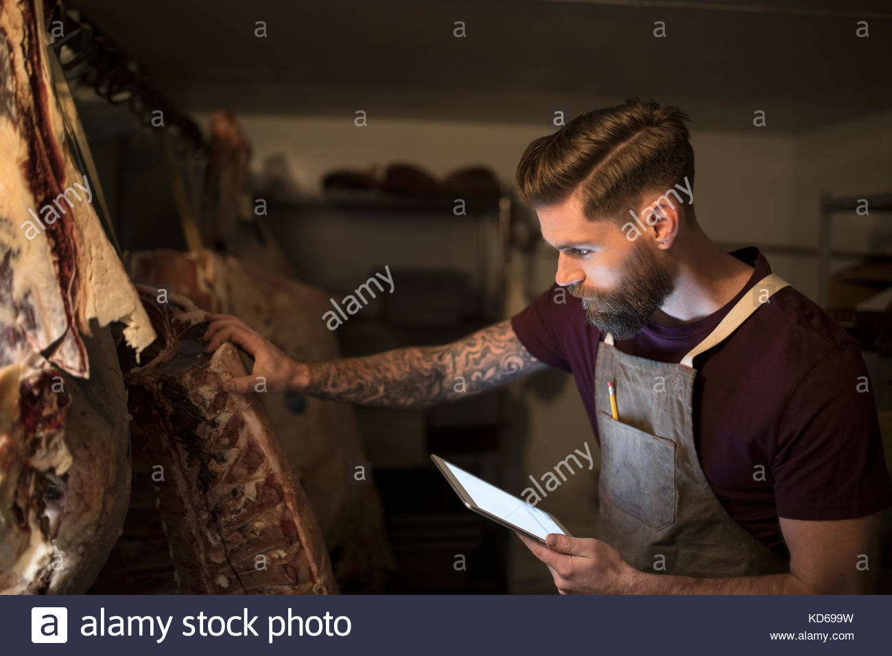 Male butcher with digital tablet examining meat slabs dry aging - Stock Image