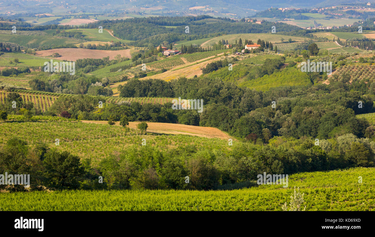 Near San Gimignano, Siena Province, Tuscany, Italy. Typical rolling countryside with vineyards and farmhouses. - Stock Image