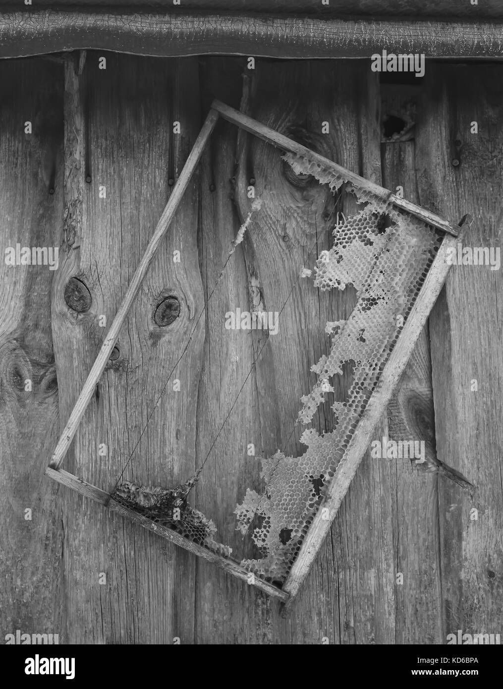 Old honeycomb frame hangs on the wooden barn wall - Stock Image