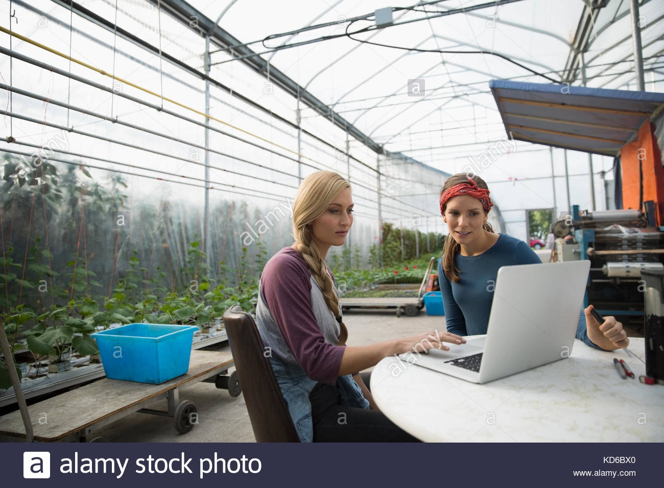 Female farmers using laptop in greenhouse - Stock Image