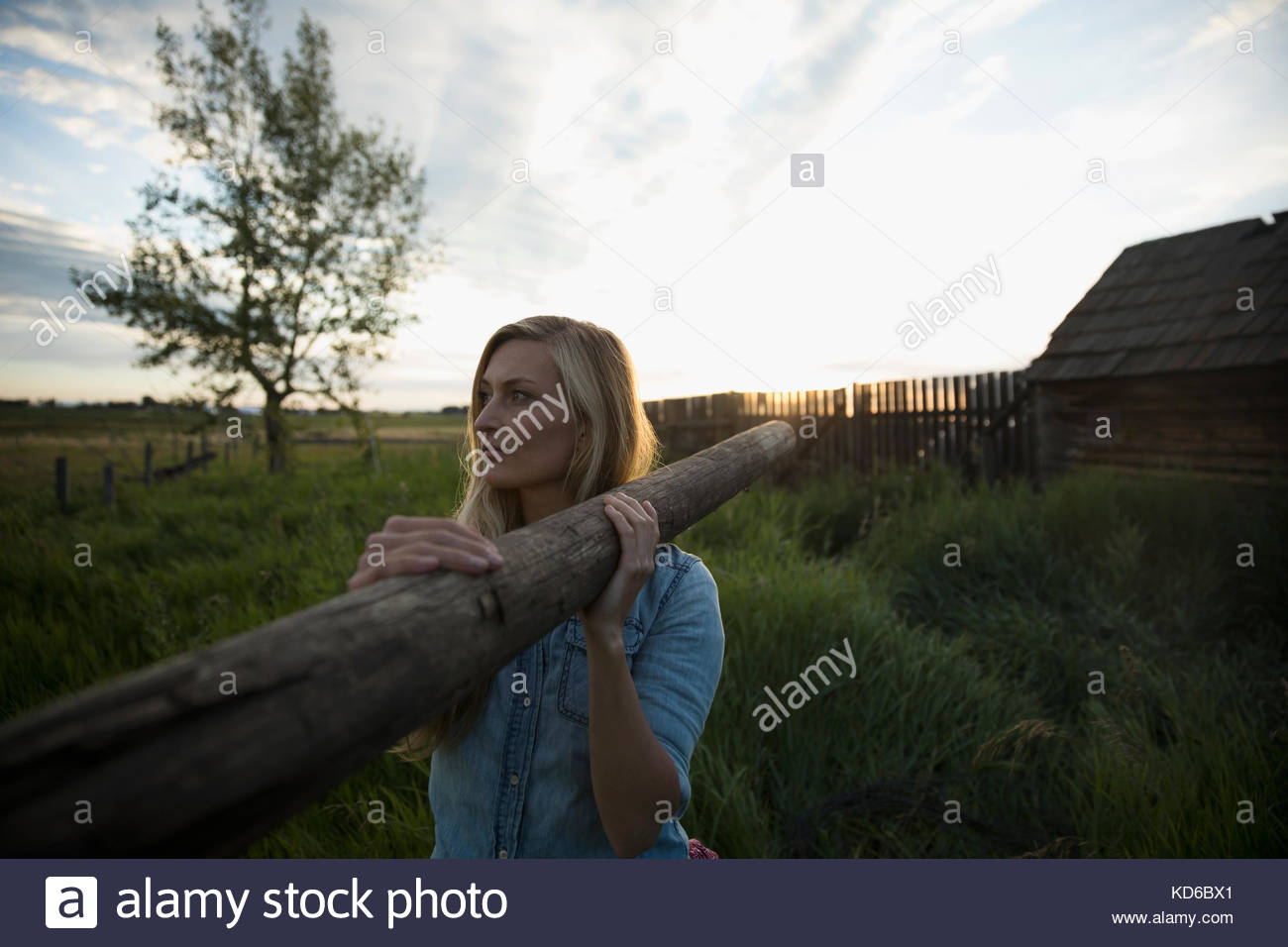 Young female farmer carrying fence post on farm at sunset - Stock Image