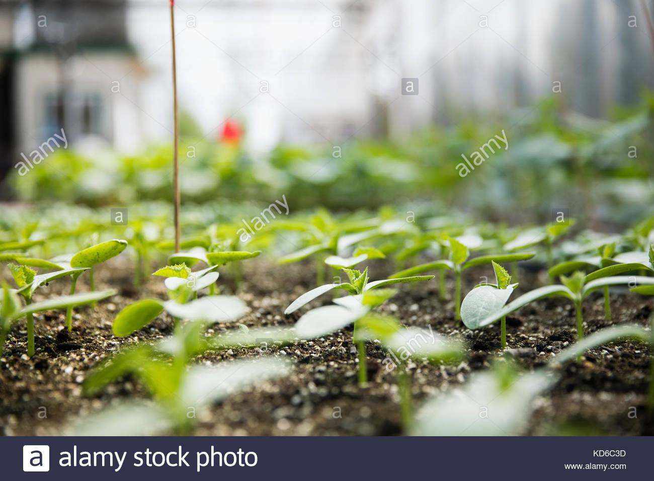 Green seedling plants growing - Stock Image