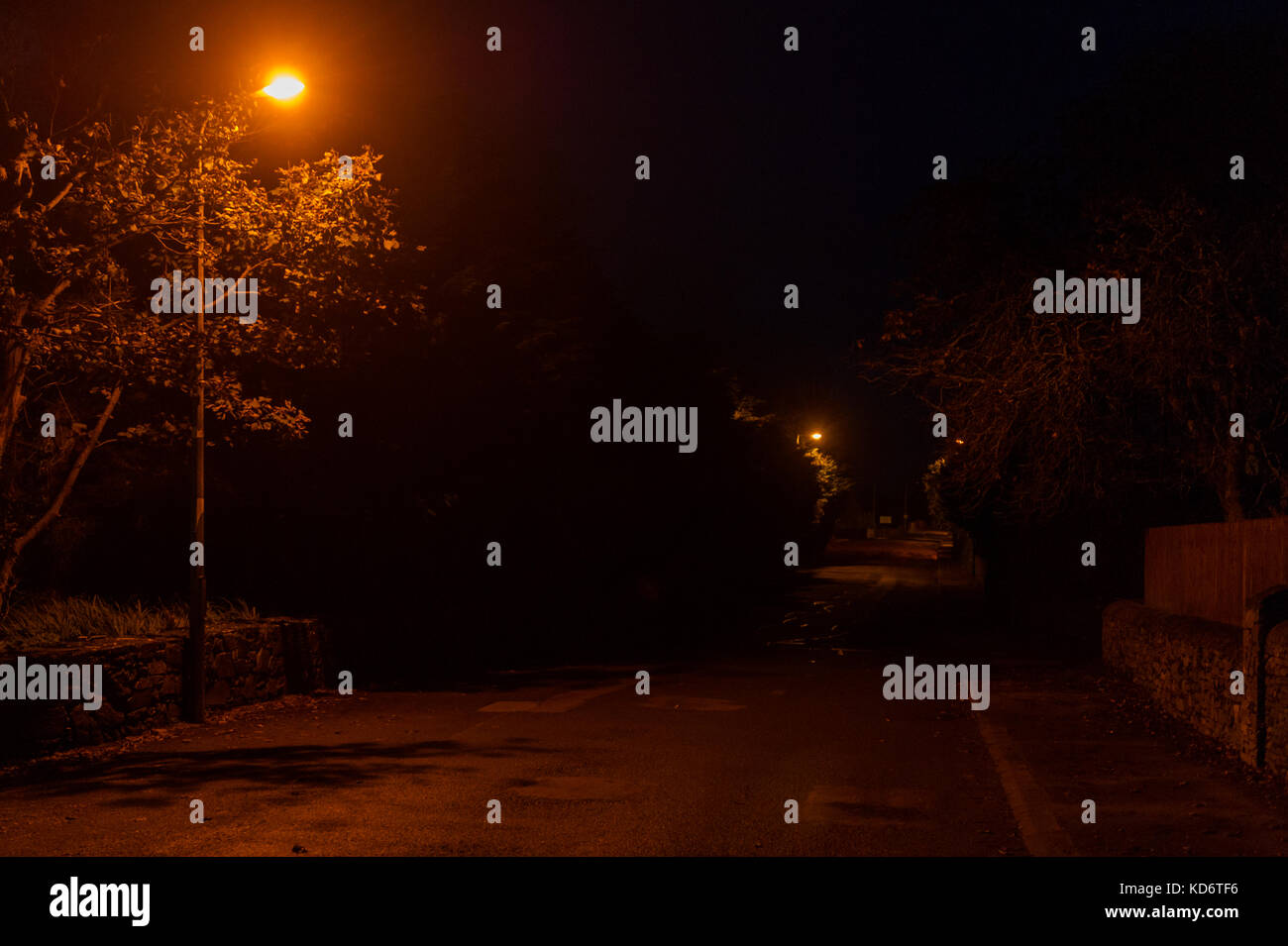Empty road on a dark night with an orange street light illuminating the road and a tree with copy space. - Stock Image