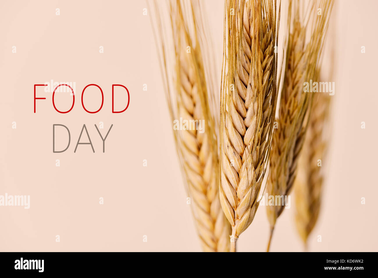 closeup of some wheat spikes and the text food day against an off-white background - Stock Image