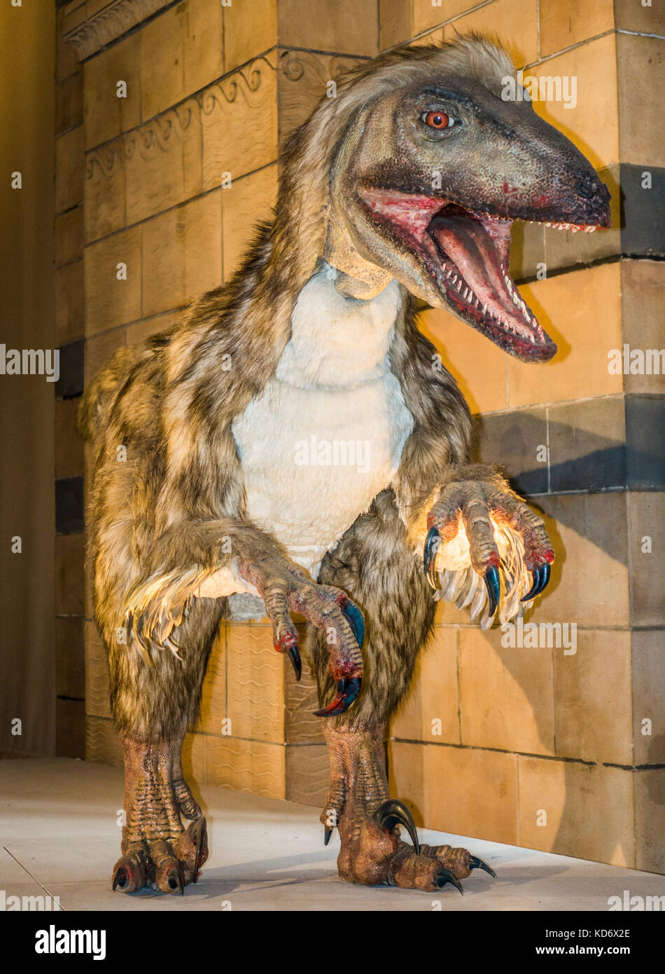 Deinonychus (meaning terrible claw), feathered raptor dinosaur. This is an animatronics exhibit at the Natural History - Stock Image