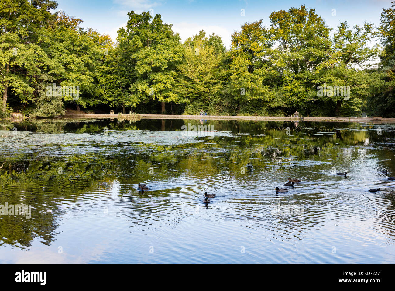 Anglers on the Lilly ponds at Keston Common a popular fishing spot, Bromley, London, UK - Stock Image