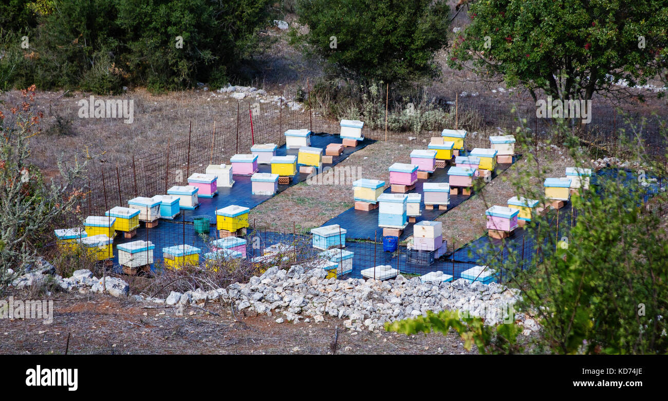 Brightly painted beehives in a fenced enclosure on the rocky island of Ithaka in the Ionian Islands of Greece - Stock Image
