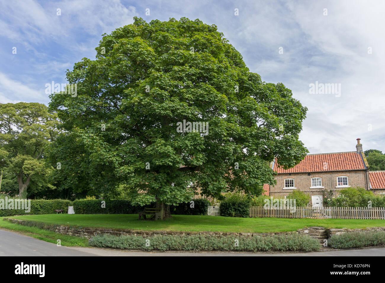 Big Oak Tree Stock Photos Amp Big Oak Tree Stock Images Alamy