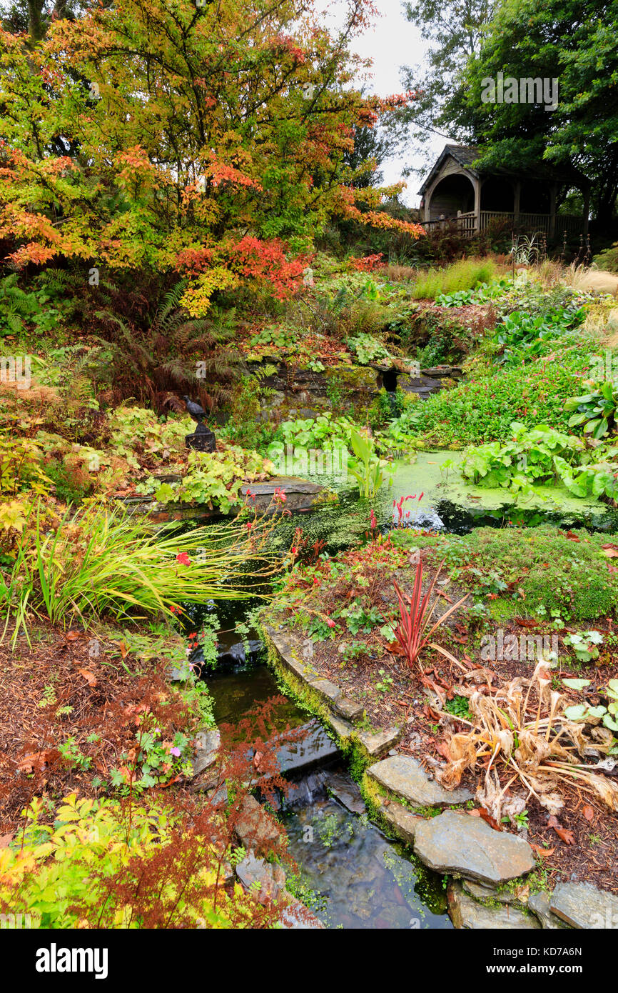 Autumn colour around the stream running up to the summerhouse in the quarry garden at The Garden House, Devon, UK - Stock Image
