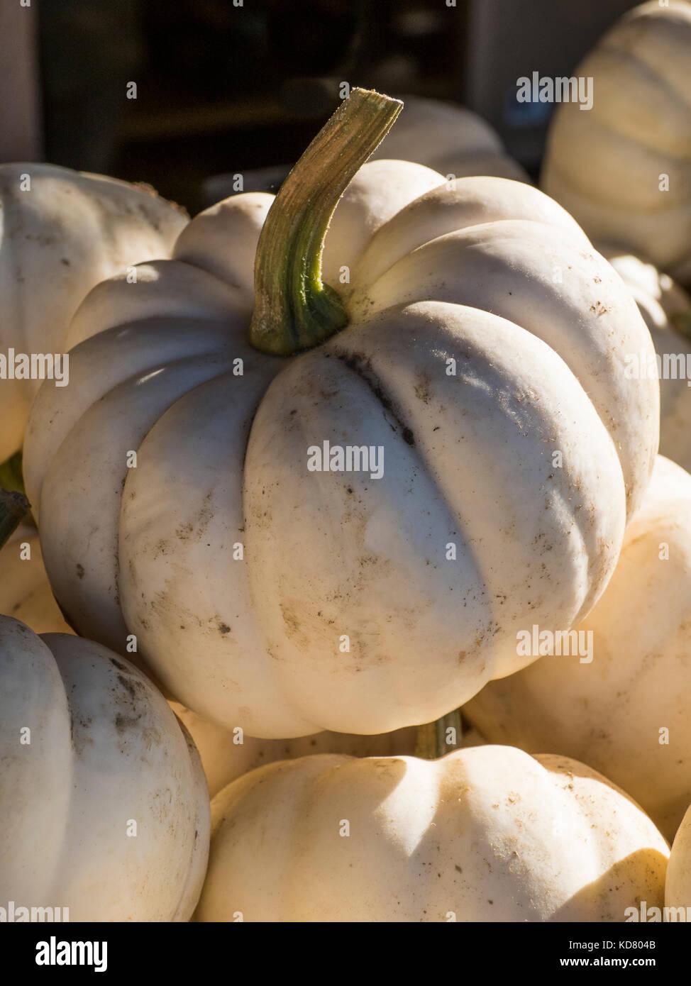 Valenciano pumpkins, Woodstock Farmers' Market, West Woodstock, Vermont. - Stock Image
