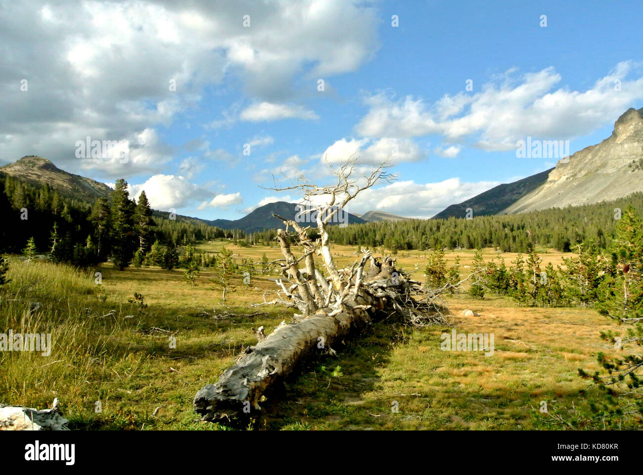 view of tuolumne meadows Stock Photo