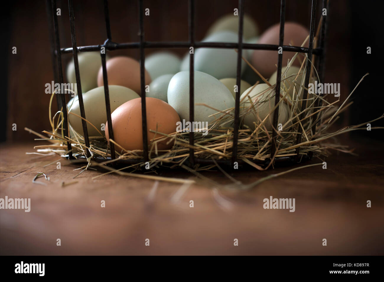 Fresh, multi-colored eggs in metal basket with hay on a rustic wood surface. - Stock Image