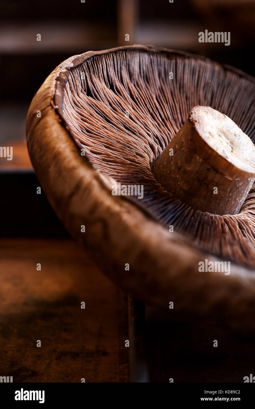 Detail shot of mushroom texture with rich brown surface. - Stock Image