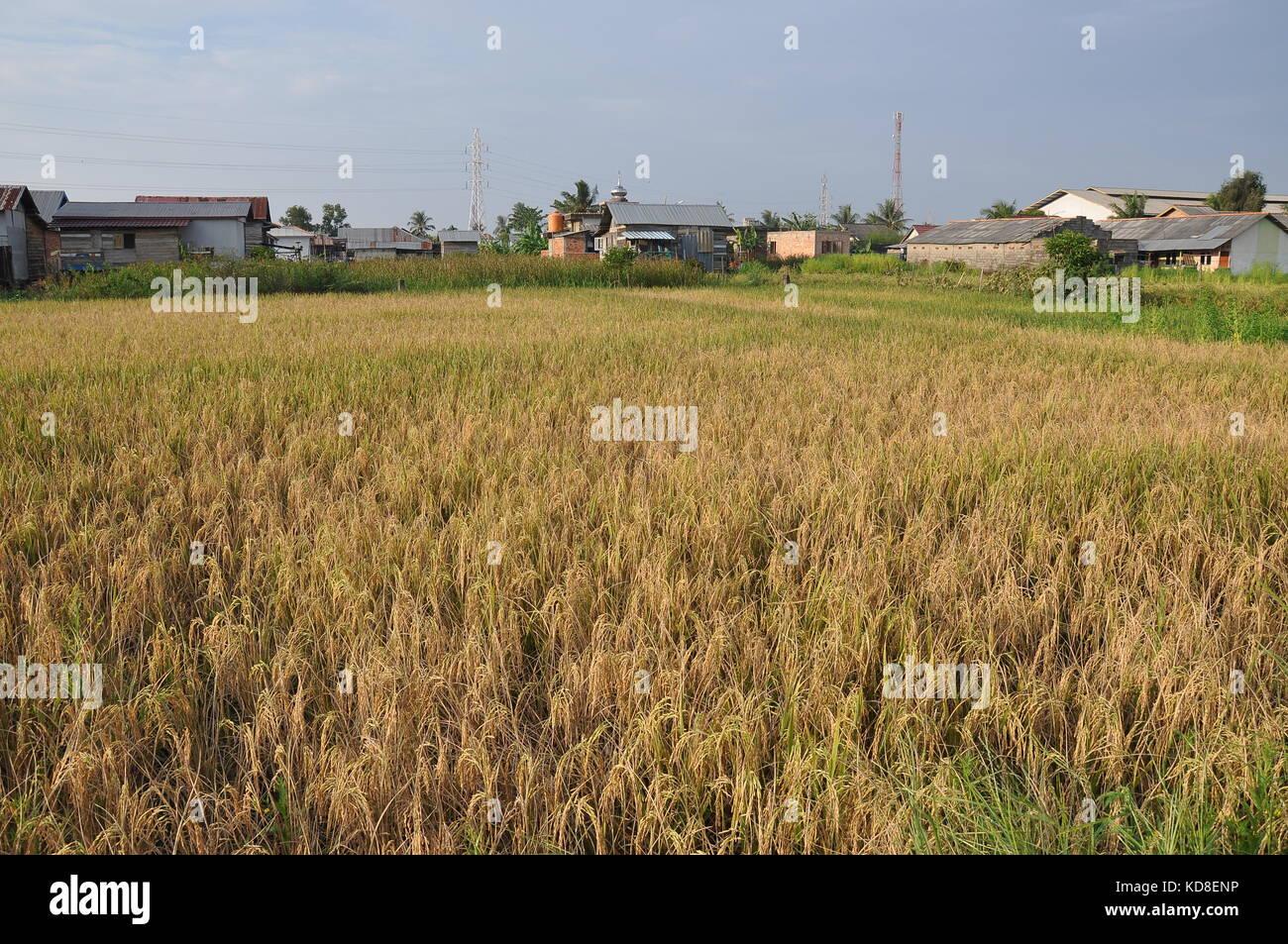 palembang - Stock Image