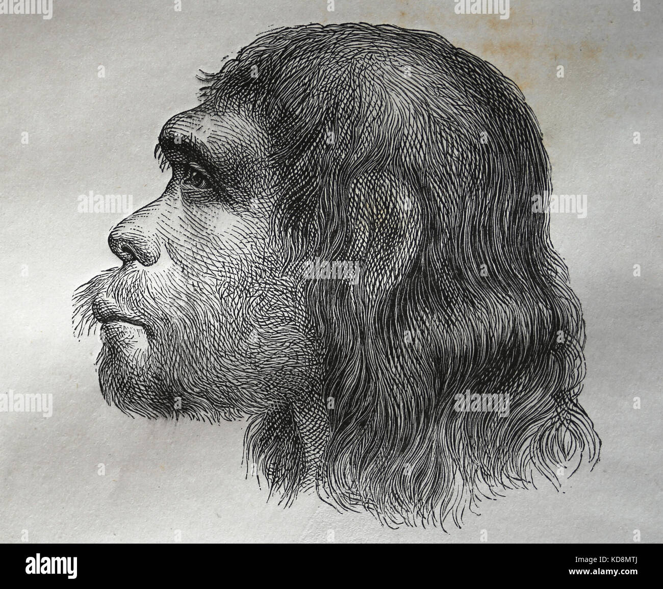 Neanderthal. Archaic humans in the genus Homo. Reconstruction. Engraving, 1883. - Stock Image
