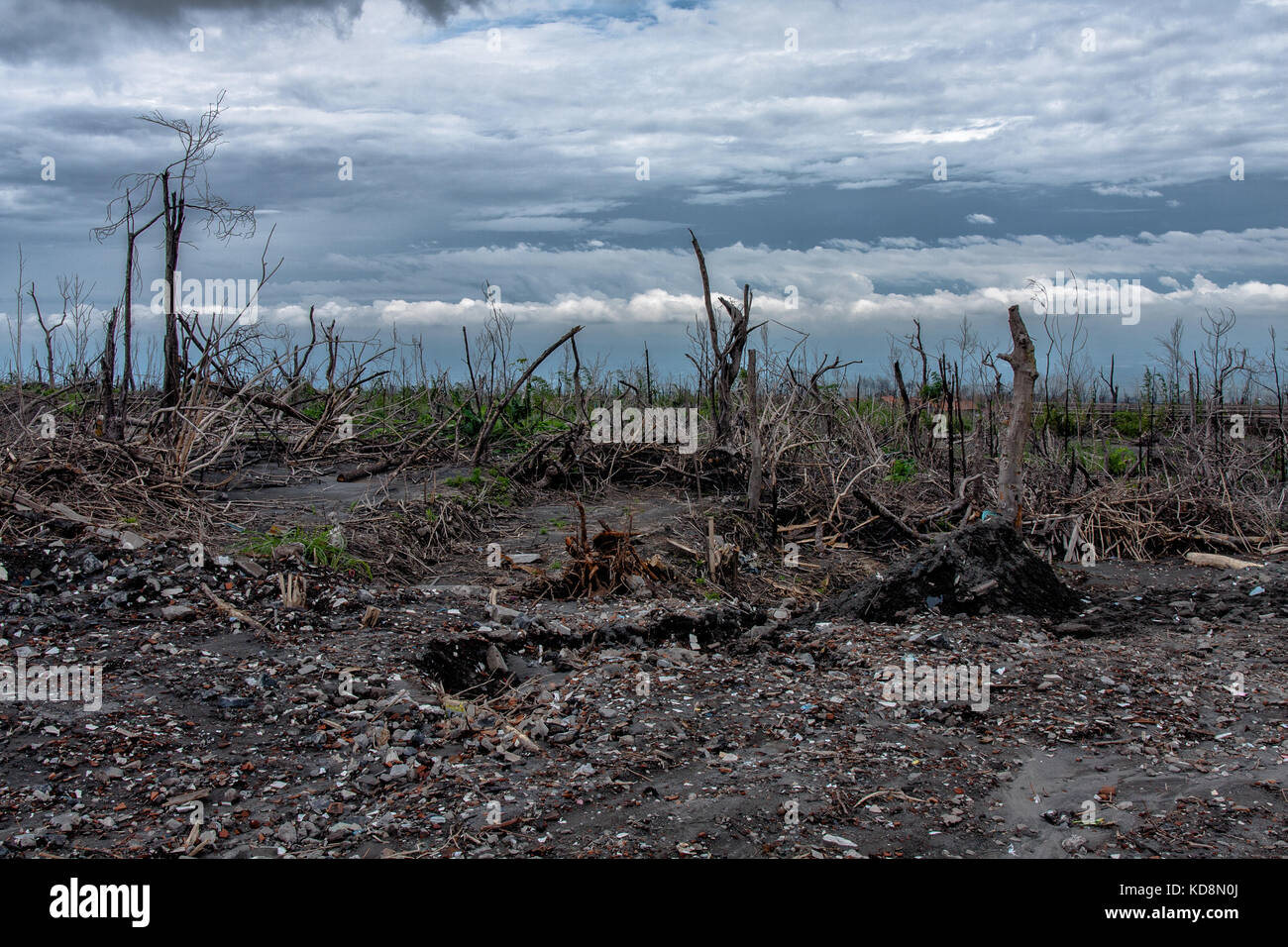 The forest burnt by the Mount Merapi eruption - Stock Image