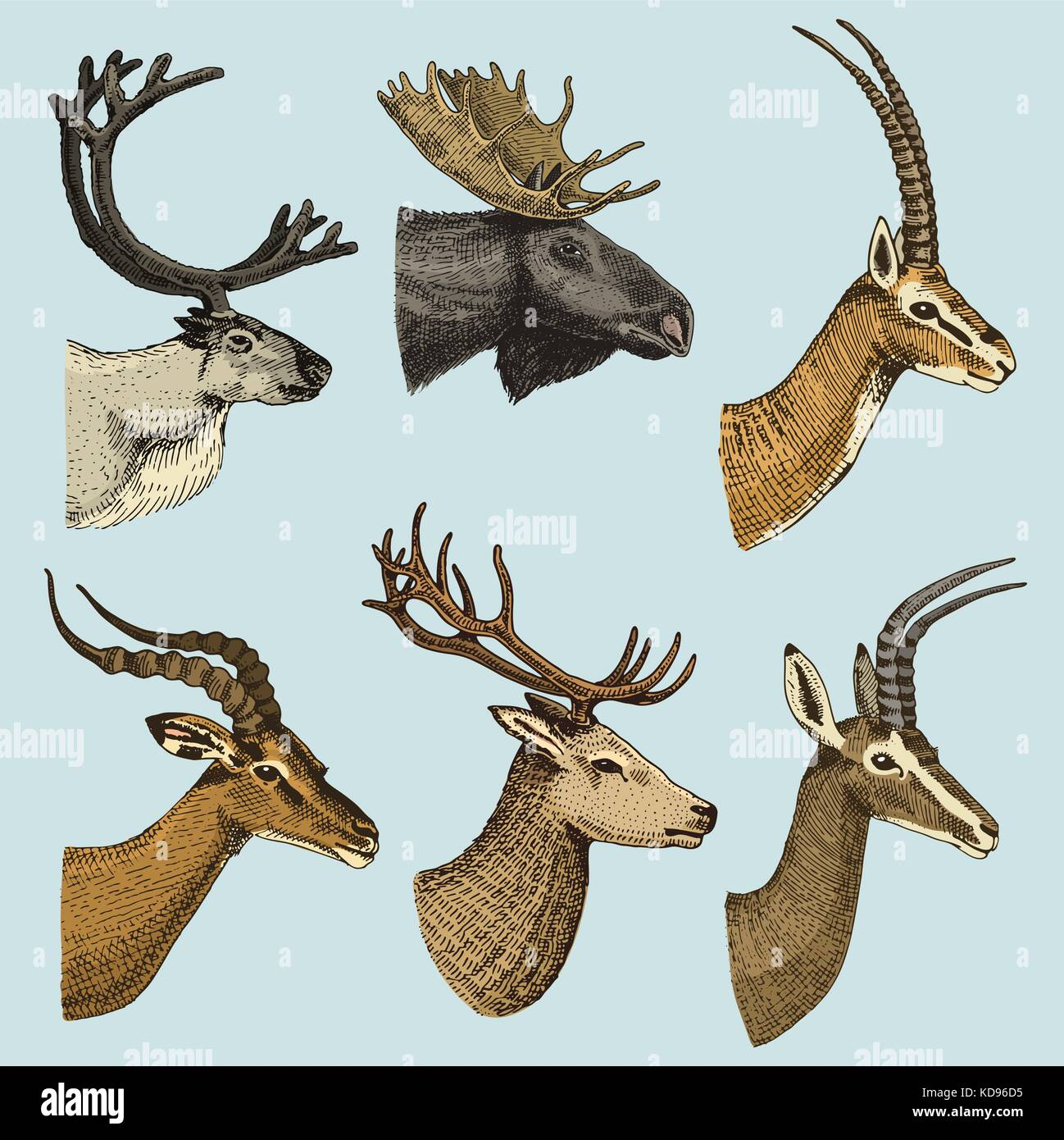 elk horn chat Elkhorn businessman patrick gottsch has bought a 3,400-acre ranch near santa fe, new mexico, from radio personality don imus.
