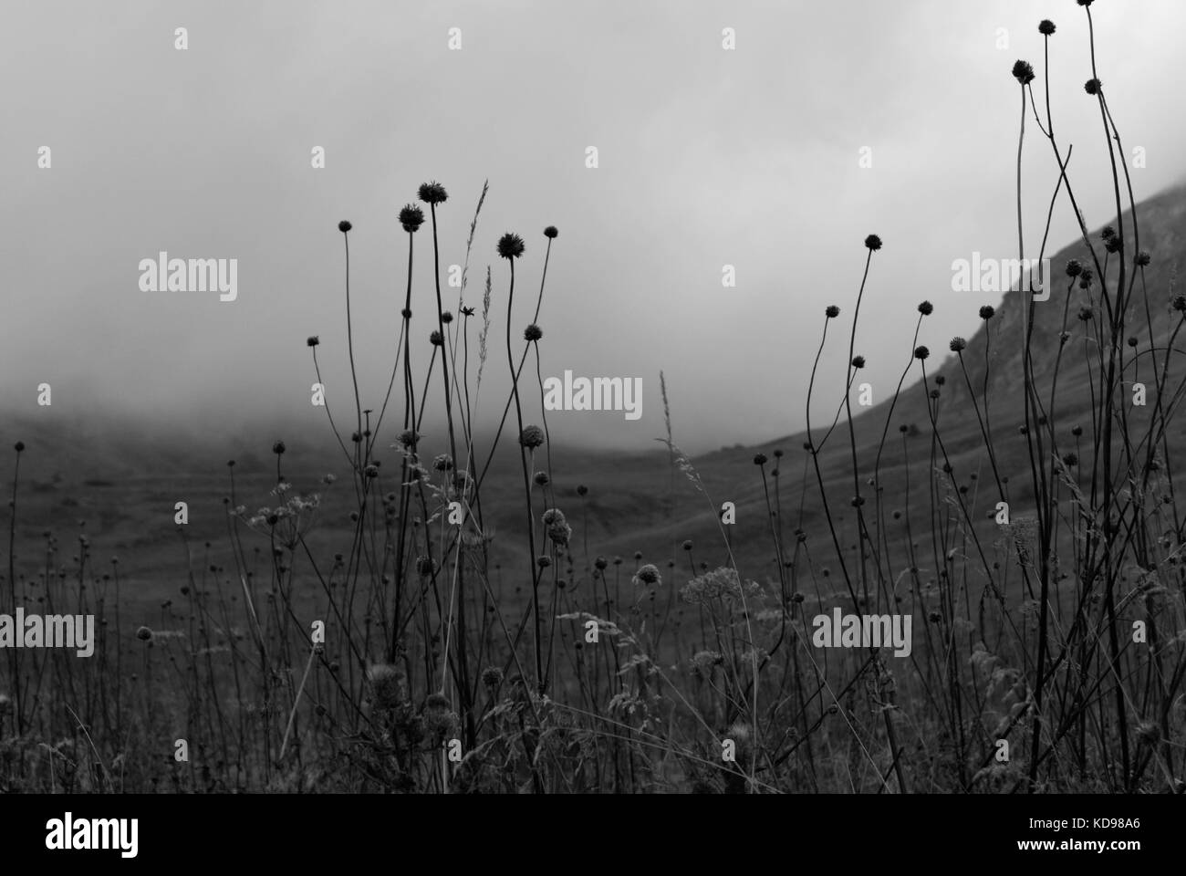 gloomy valley in the mountains, covered with a cloud, visible through the dry stems of the autumn weeds - Stock Image