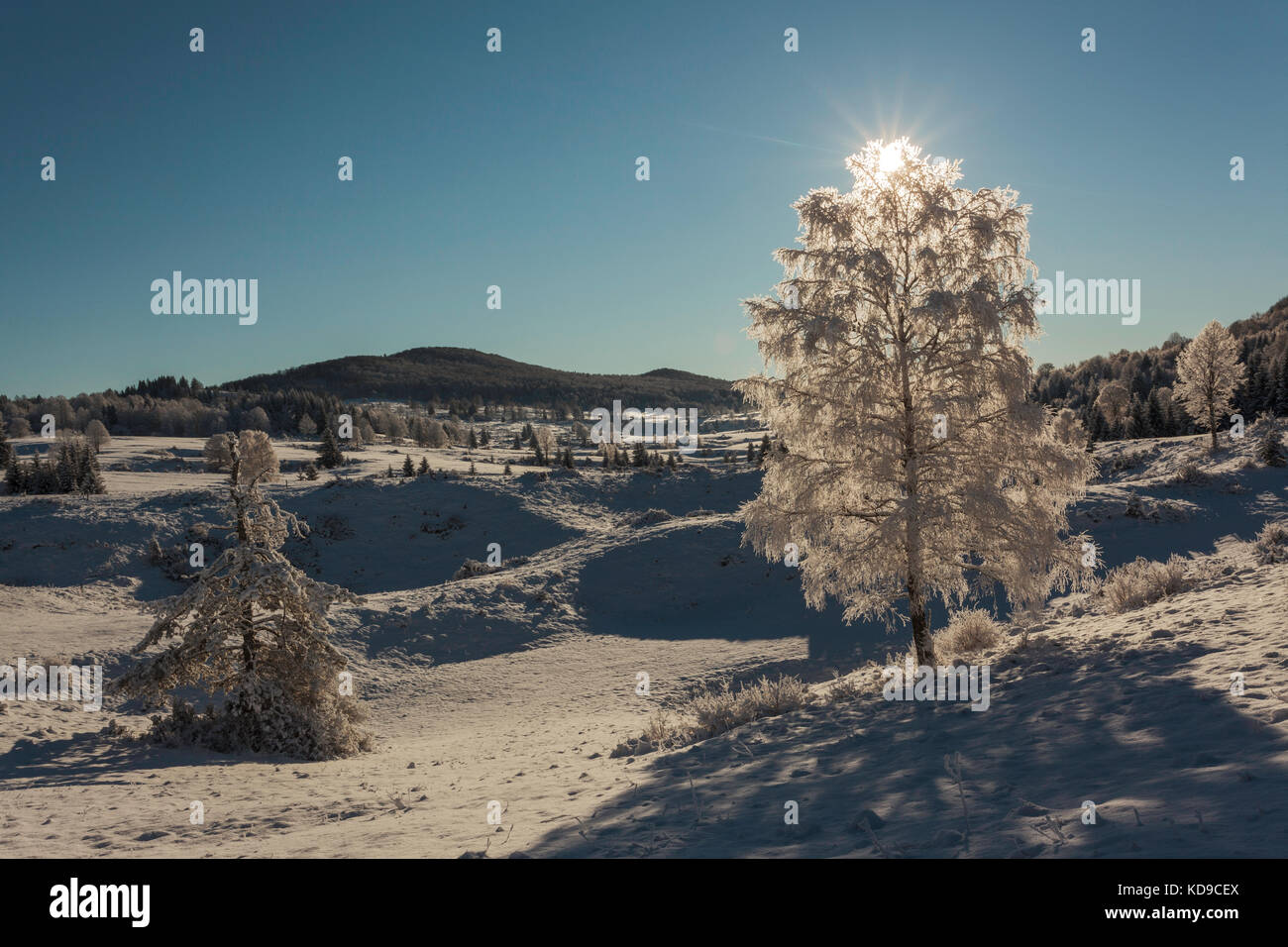 After heavy snow, Kočevska region is covered in idilic white clothes. With amazing sunset near village Laze. - Stock Image