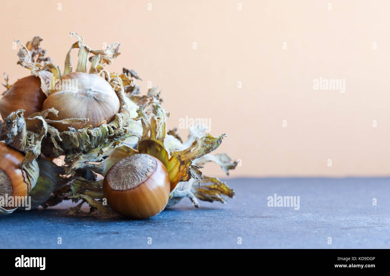 Healthy still life autumn harvest ripe hazelnut Corylus Maxima. Organic filbert cobnuts with dried leaves on stony - Stock Image