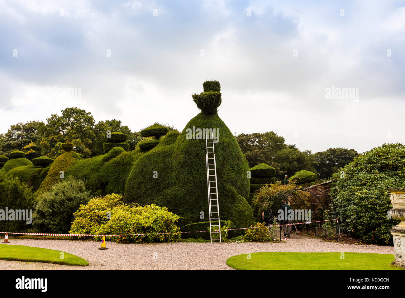 Maintenance in progress of a large topiary hedging. - Stock Image