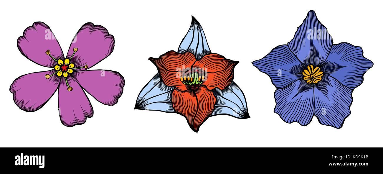 Colored Exotic flowers set. Botanical vector vintage illustration. Design elements. - Stock Vector