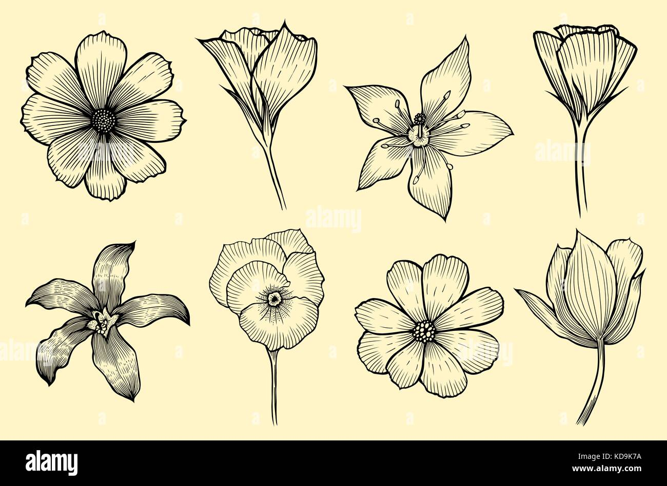Exotic flowers set. Botanical vector vintage illustration. Design elements. Stock Vector