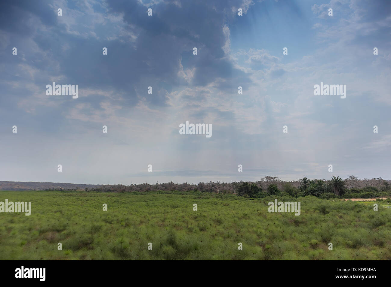 African green field in angola. Dramatic sky. Stock Photo