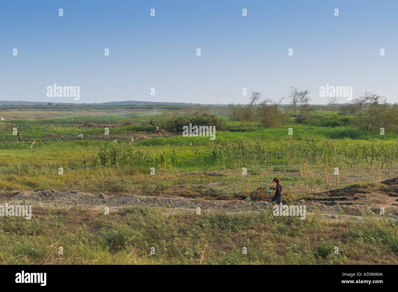 Field of African agriculture. With farmers. Angola. - Stock Image