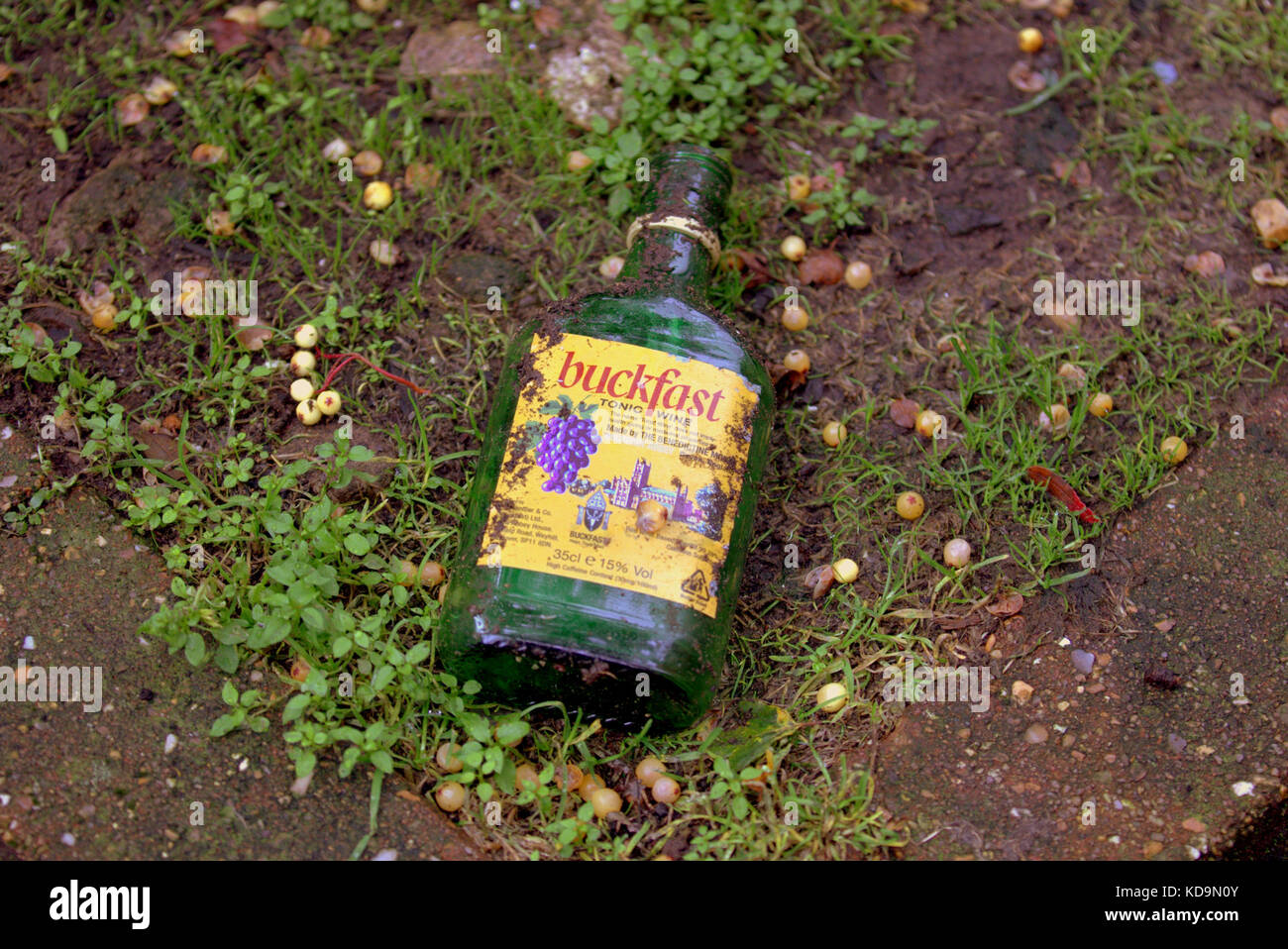 57a890aa290 discarded buckfast bottle on earth grass Glasgow Scottish alcohol problem  glasgow health - Stock Image