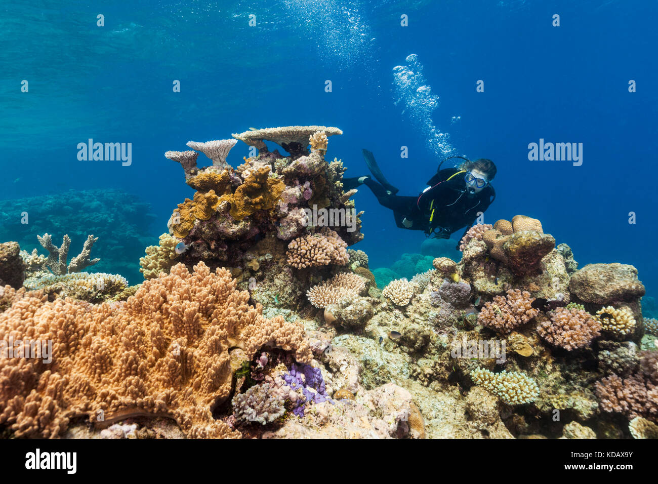 Diver exploring the coral formations of Agincourt Reef, Great Barrier Reef Marine Park, Port Douglas, Queensland, - Stock Image