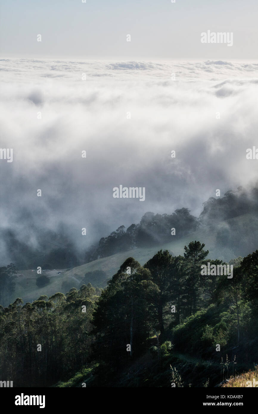 View from top of Berkeley Hills of foggy San Francisco Bay, California, USA - Stock Image