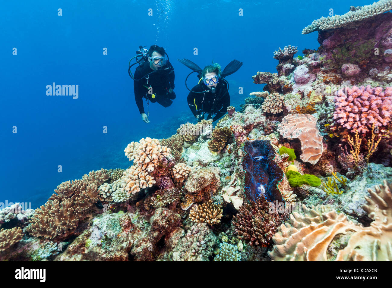 Divers looking at a giant clam and coral formations at St Crispin Reef, Great Barrier Reef Marine Park, Port Douglas, Stock Photo