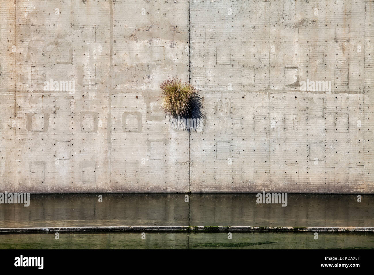 Plant growing out of wall along Los Angeles River, Downtown Los Angeles, California, USA Stock Photo