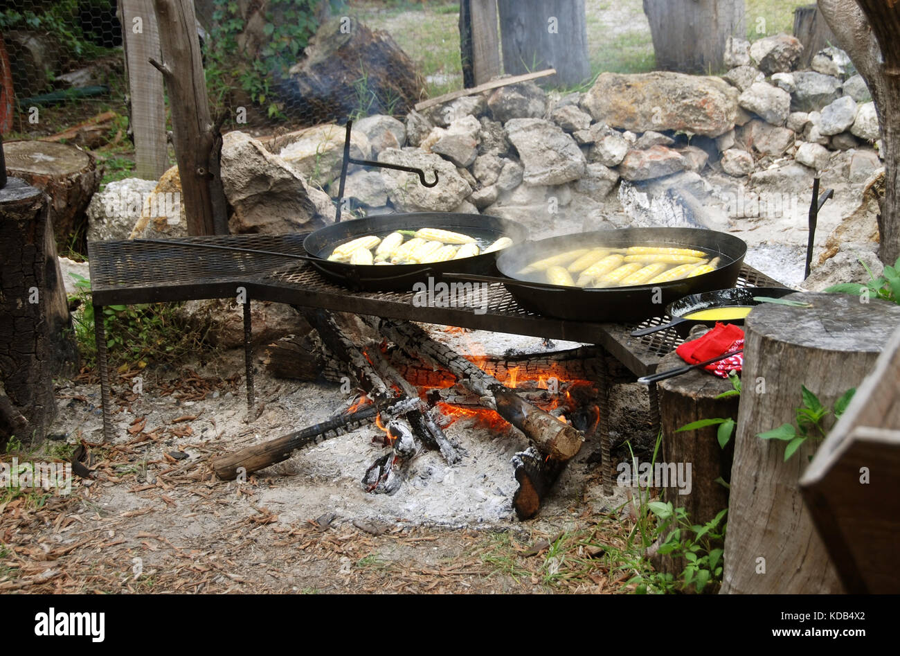 Cooking corn on a campfire  in the wilderness - Stock Image