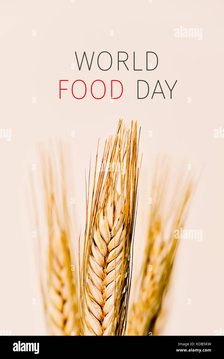 closeup of some wheat spikes and the text world food day against an off-white background - Stock Image