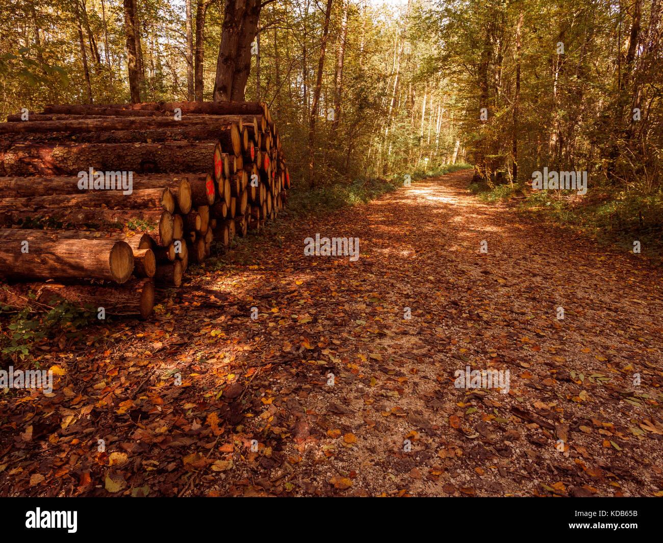 Geerntetes Holz am Wegesrand aufgestapelt - Stock Image
