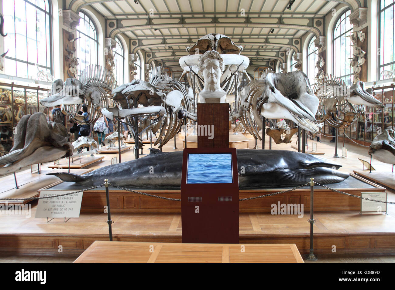 The Gallery of Paleontology and Comparative Anatomy, Paris Stock ...